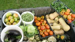 Vegetables harvested from Lisle Community Garden