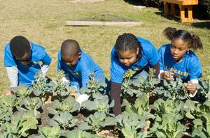 Gadsden Elementary School Garden