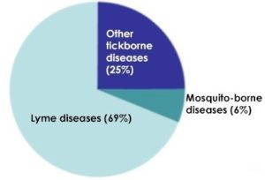 pie chart on notifiable vector-borne diseases