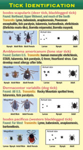 Tick identification graphic