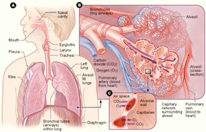 graphic depicting COPD