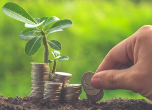 photo of a hand placing money by a small plant